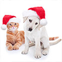 Welland SPCA Holiday Wish List, Ontario