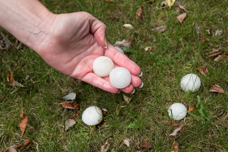 Tips to Prevent Hail & Windstorm Damage, Youngs Insurance, Ontario