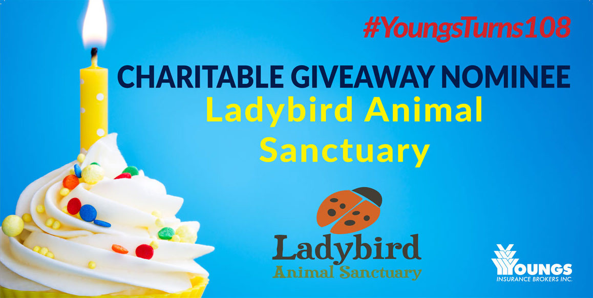 Youngs Insurance Brokers' 108th Birthday Charitable Nominee, Ladybird Animal Sanctuary