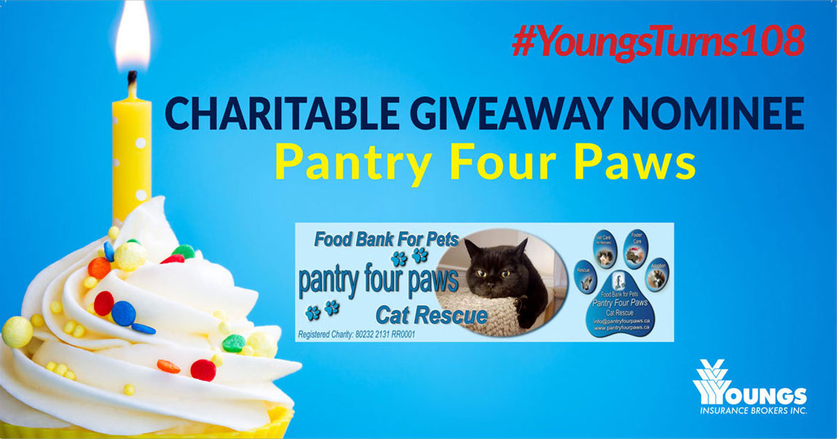 Youngs Insurance Brokers' 108th Birthday Charitable Nominee, Pantry Four Paws